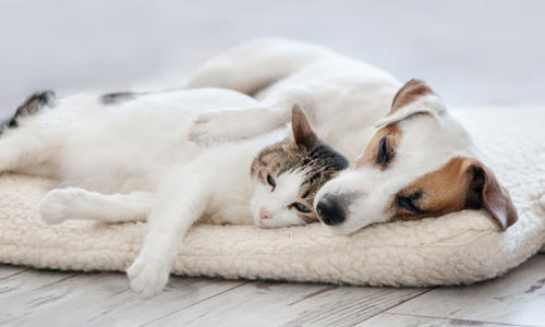 How Do I Know if My Cat or Dog Is Overweight?