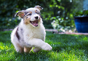 When to Switch from Puppy Food to Adult Dog Food